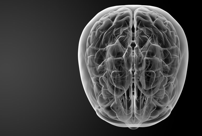 Human brain X ray -top view