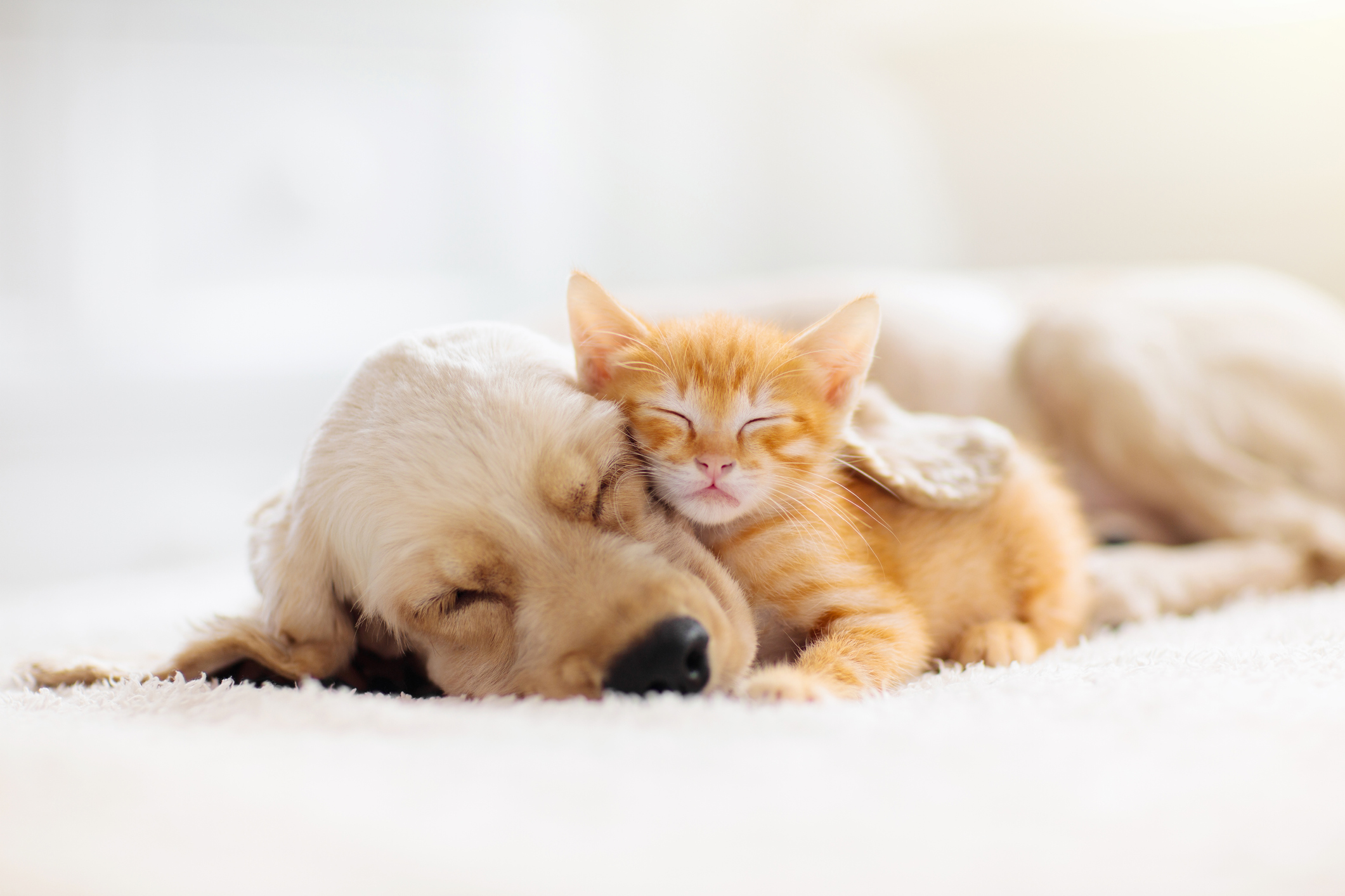 Cat and dog sleeping together. Kitten and puppy taking nap. Home pets. Animal care. Love and friendship. Domestic animals.